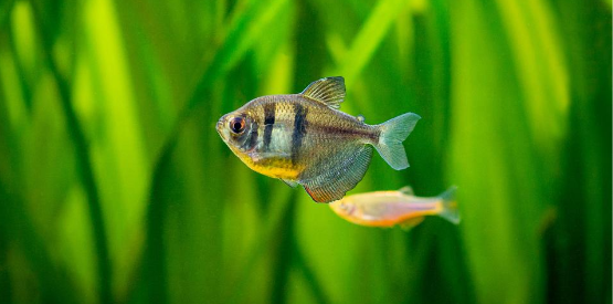 The Nitrogen Cycle | Keeping Your Aquarium Healthy