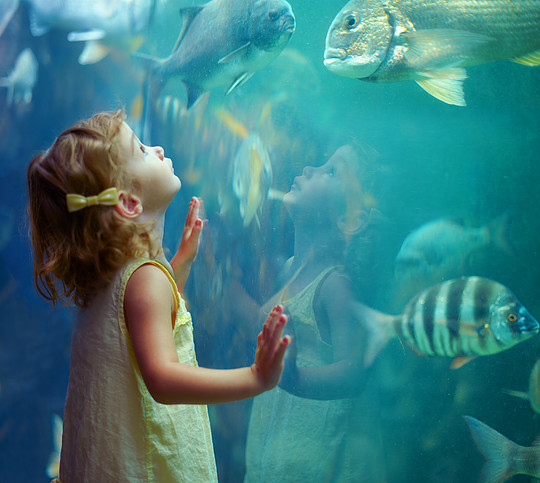 4 Fun Ways to Celebrate National Aquarium Month