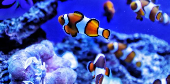 Tips You Need to Know About Keeping a Marine Aquarium