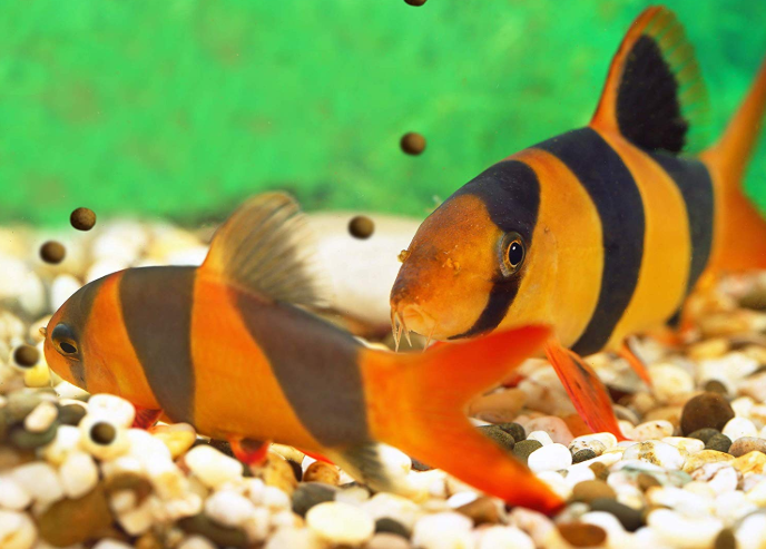 Spotlight Fish: Bottom Feeder Fish