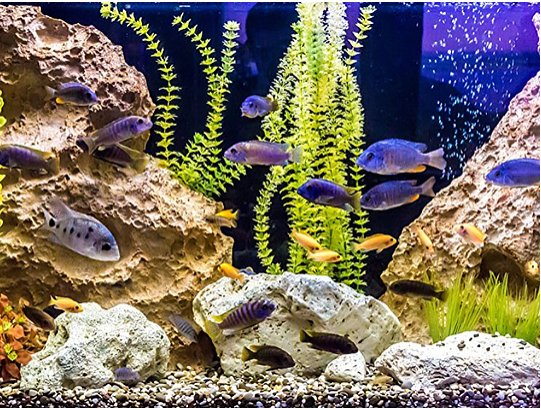 Aquarium Essentials for First-Time Fish Owners