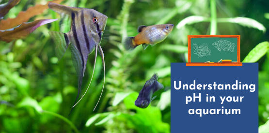 FISH LEARNING FRIDAYS | Understanding pH in your aquarium